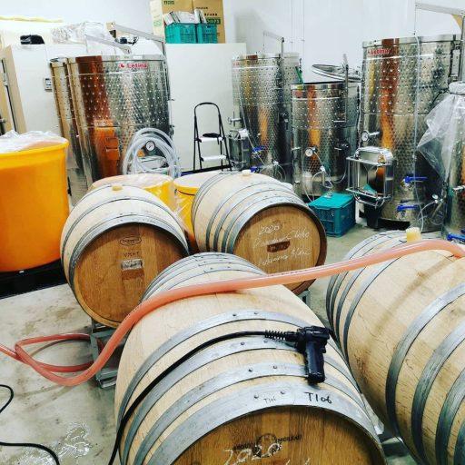 bellwood vineyard 2021 09 01 (1)