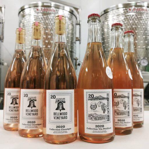 bellwood vineyard 2021 09 01 (7)