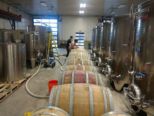 black birch vineyard 2021 08 23 (2)