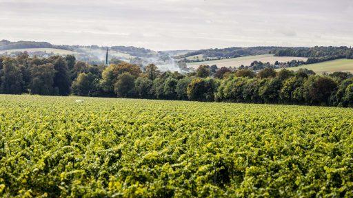 Simpsons Wine Estate in the United Kingdom.