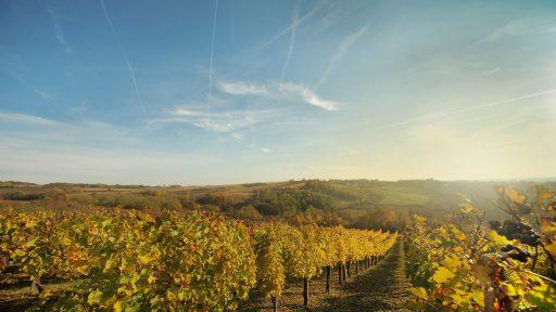 vinarija adora 2021 09 10 (8)