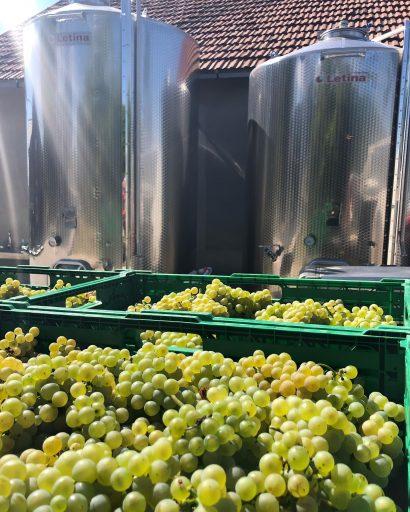 vinarija adora 2021 09 14 (1)